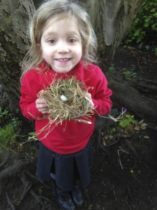 Chloe Bird nest