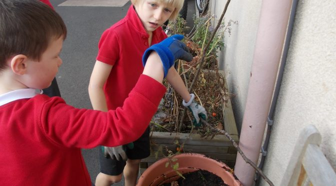 Citizenship Gardening Group