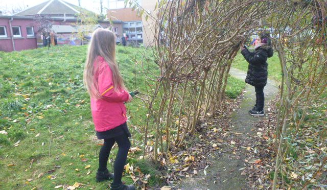 P6A in the Secret Garden