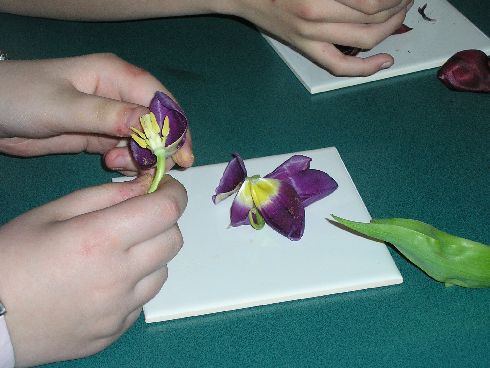 The Life of Preston Lodge PLants week one – Flower Dissection Worksheet