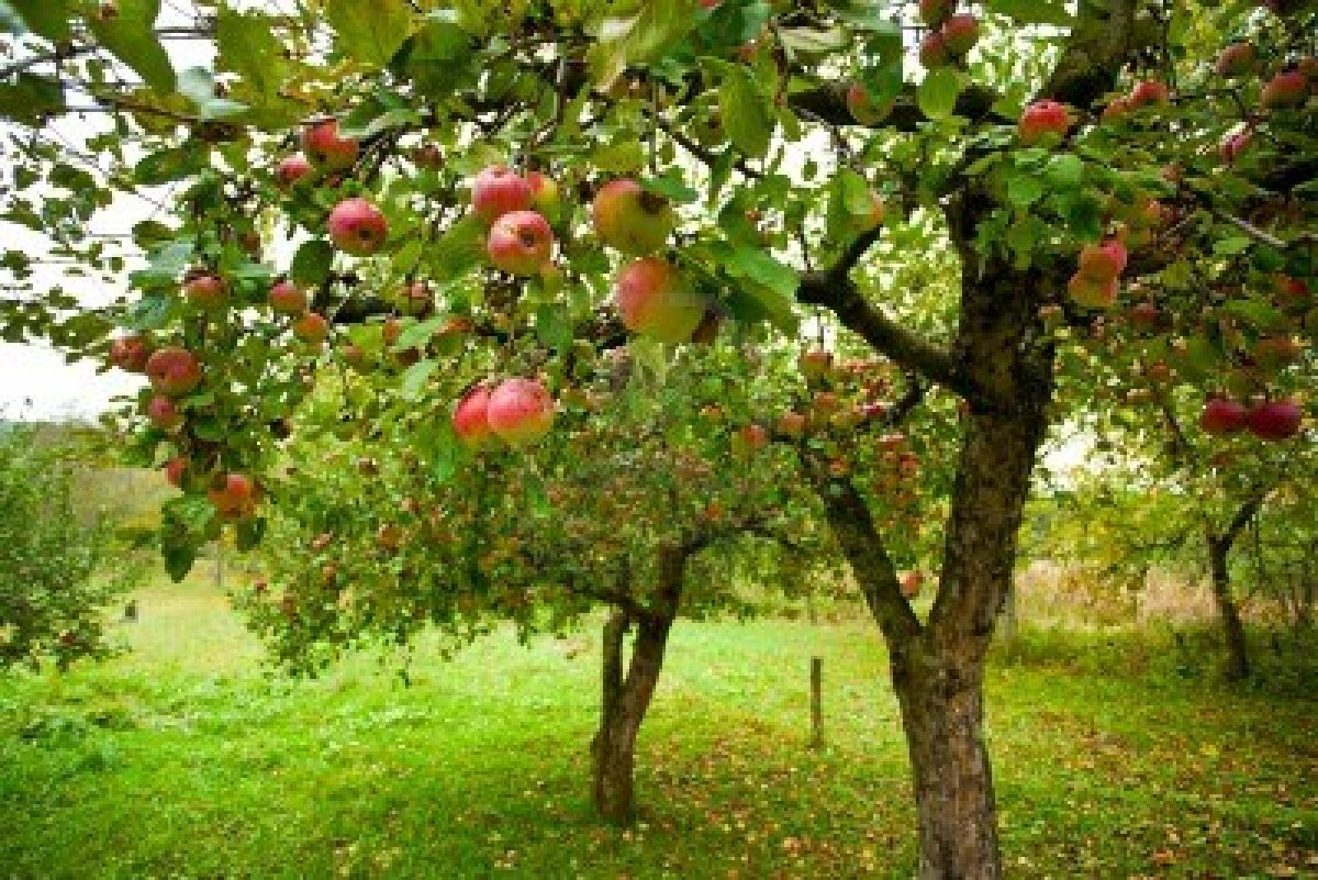 School Orchard Information – eduBuzz What's On?